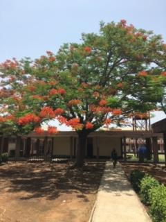 Annie Brunskill – Medical Elective –  University of Abuja Teaching Hospital, Gwagwalada, Abuja,Nigeria